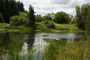 Pond surrounded with natural vegitation