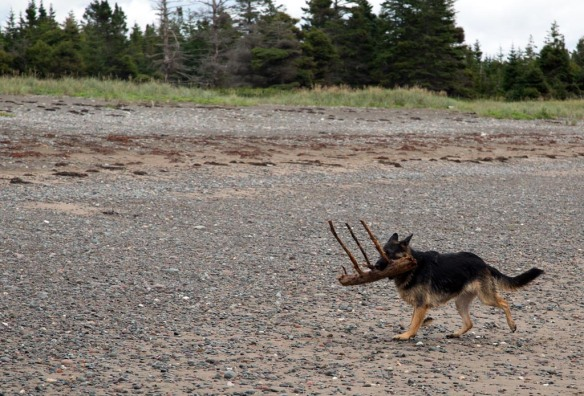 Port Shoreham Provincial Park Kona brings the stick to the truck
