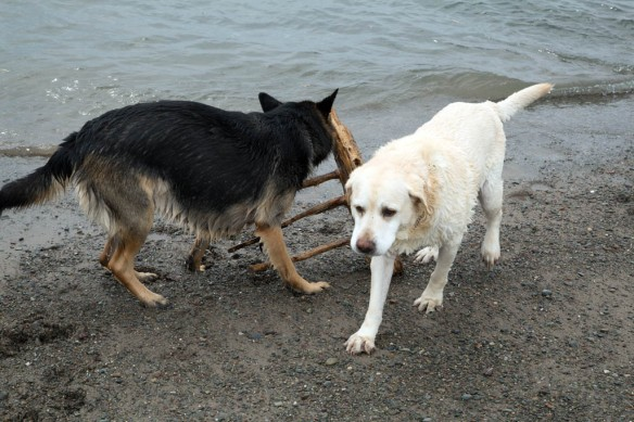 Port Shoreham Provincial Park with Kona stealing the stick
