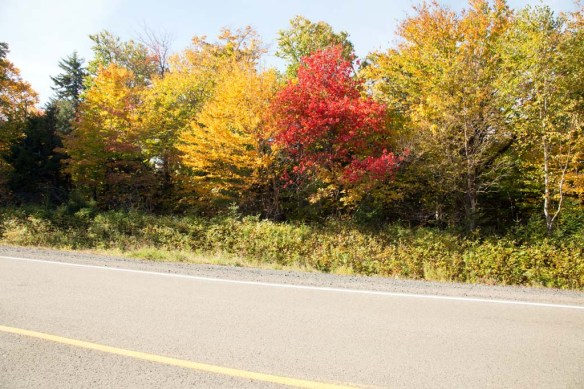 Bay of Fundy National Park fall colour on Hwy 114