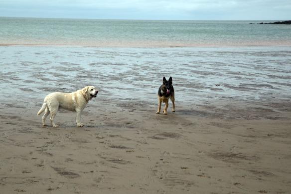 Duke & Kona on the beach by Cape Enrage