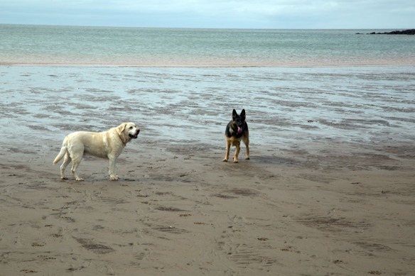 Duke & Kona on the beach by Cape Enrage