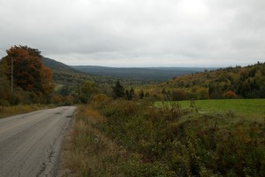 Extensive forests along the edge of Bay of Fundy