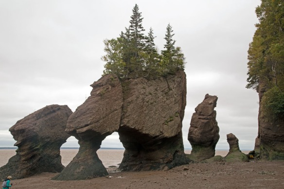 Hopewell Rocks close-up from bottom of the stairs