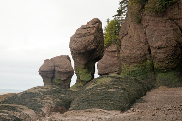 Hopewell Rocks close-up