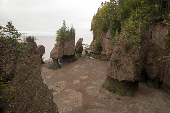 Hopewell Rocks from the viewing platform above