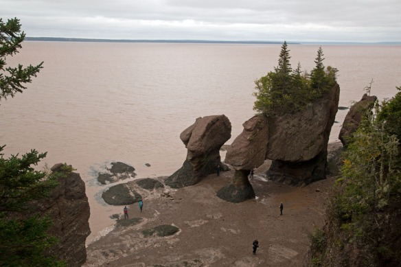 Hopewell Rocks from top viewing platform at 1503