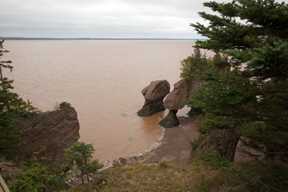Hopewell Rocks from top viewing platform at 1537