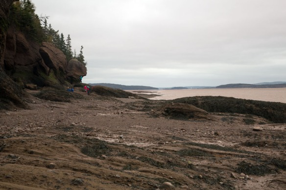 Hopewell rocks looking up Bay of Fundy towards Monkton