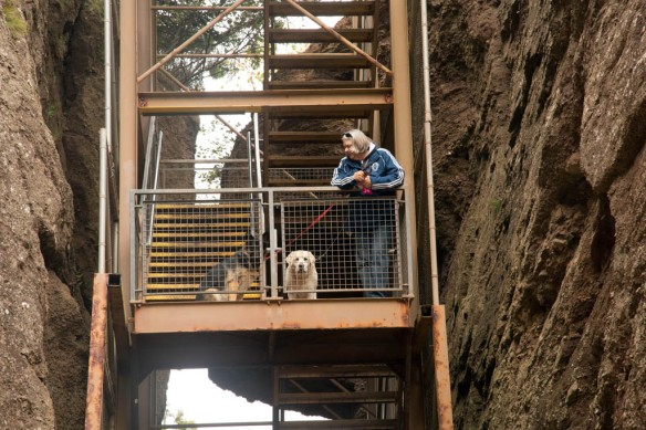 Hopewell Rocks with Judi, Duke and Kona heading up the stairs
