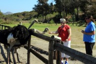 Cape Point Ostrich Farm with Judi about to feed the ostriches