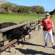 Cape Point Ostrich Farm with Judi feeding the ostriches
