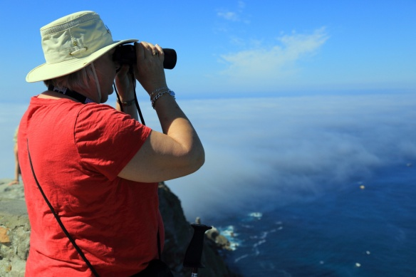 Judi looking for the elusive Southern Right Whale, which don't return until about June