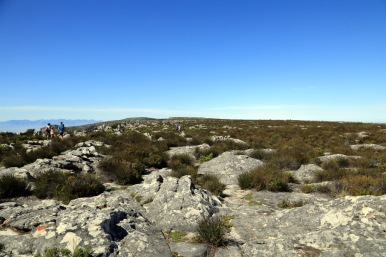 Landscape atop Table Mountain where no more maintained paths