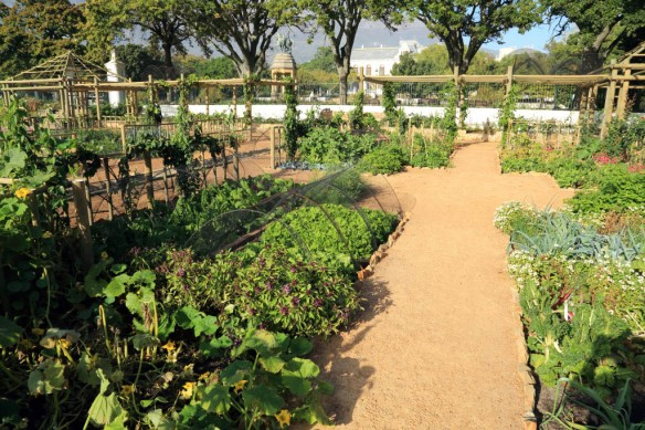Another quadrant of vegetable garden