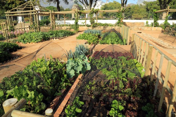 Vegetable plots in the recreated VOC gardens