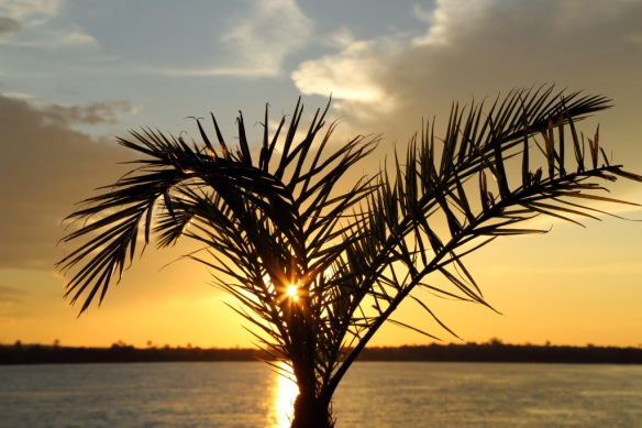 Zambesi River cruise with sunset through palm fronds