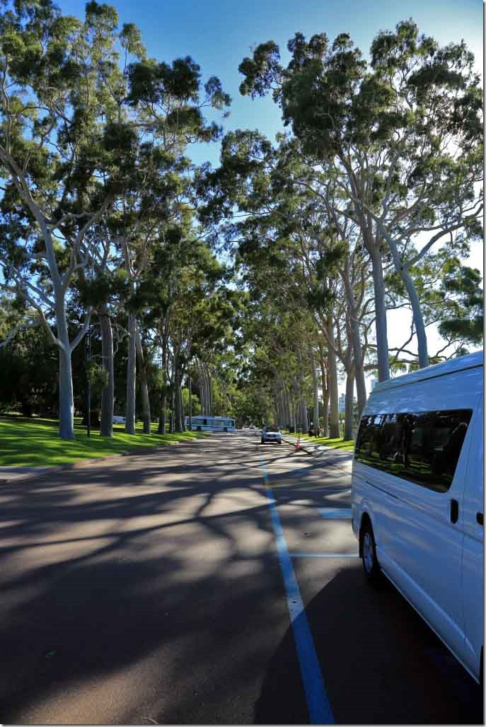 King`s Park Fraser Ave with Centenary Lemon GumTrees on both sides