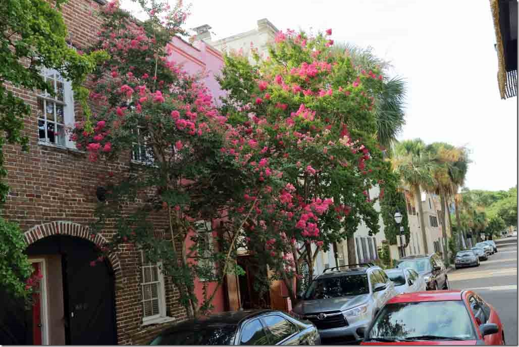 Charleston tour flower adorned tree lined downtown street
