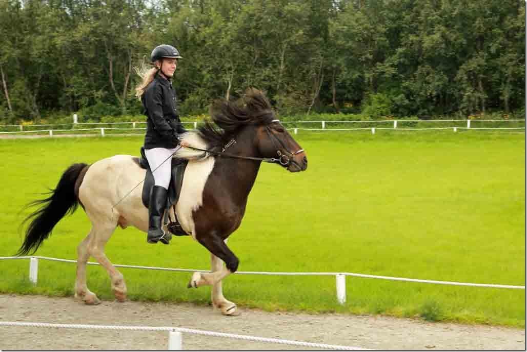 Horse show 6