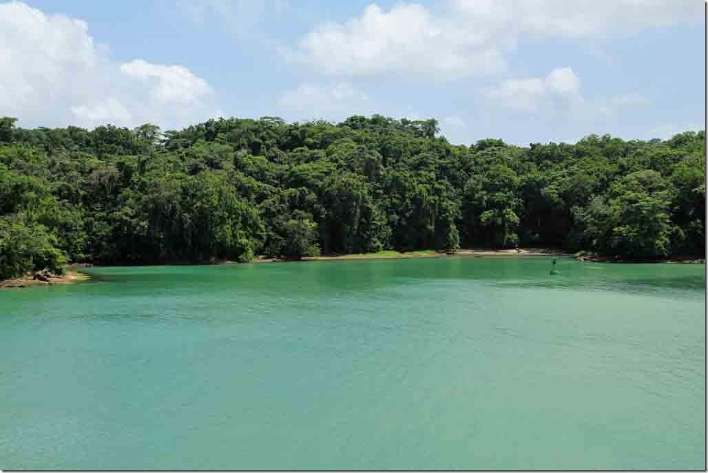 Dense jungle of the Gatun Lake rain forest