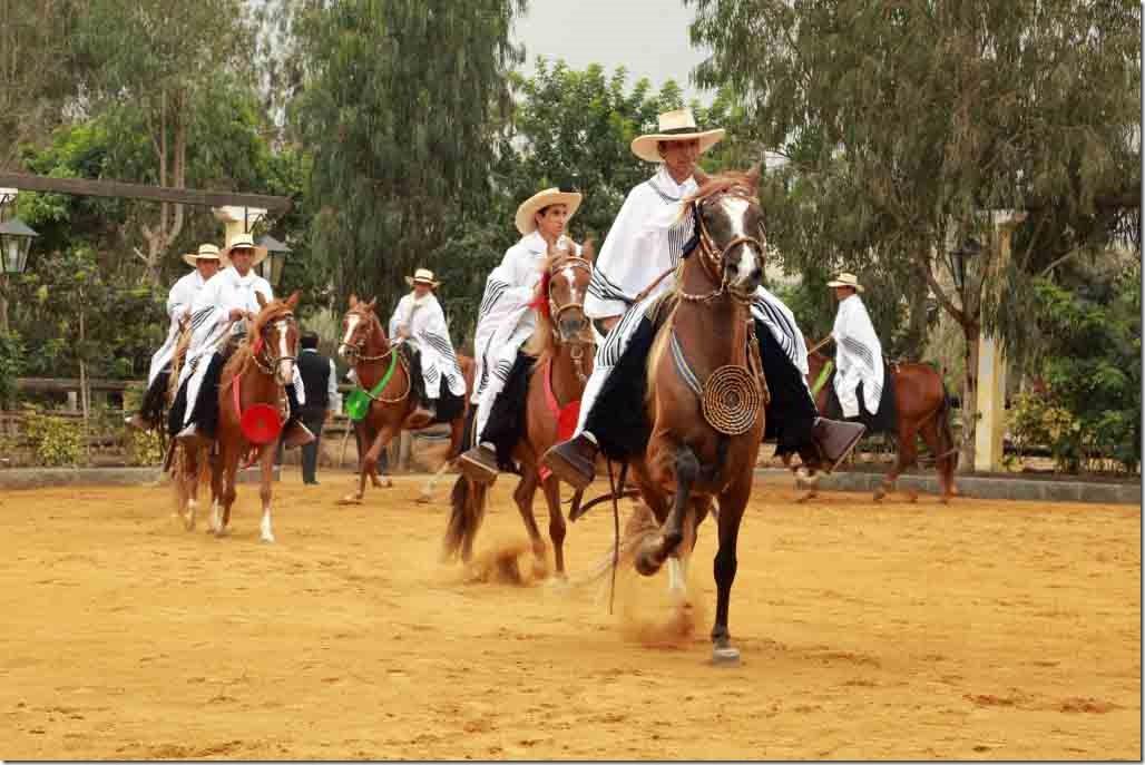 Hacienda Mamacona all horses parading around the ring