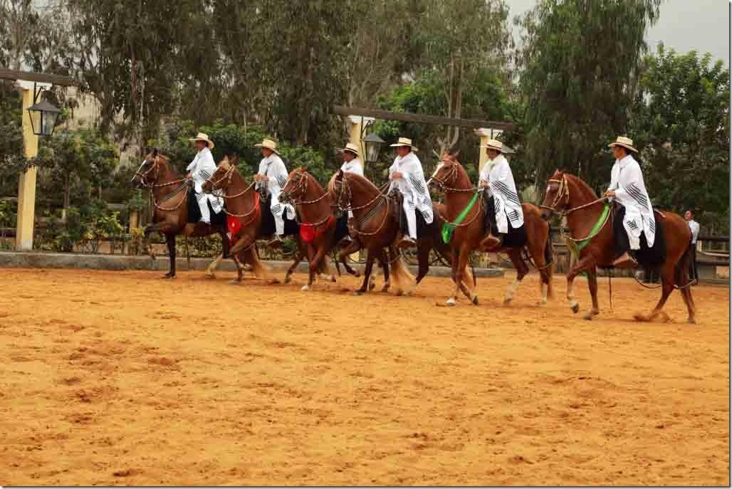 Hacienda Mamacona all horses trotting in a row 2