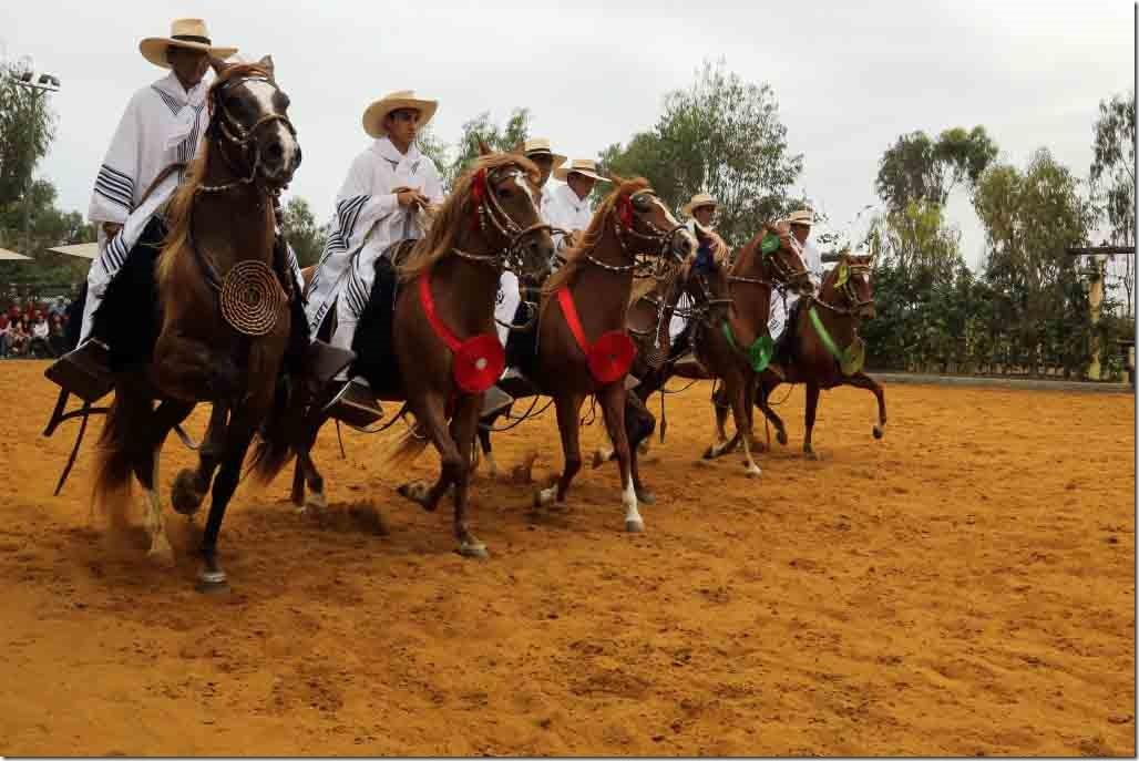 Hacienda Mamacona all horses trotting passed our seats