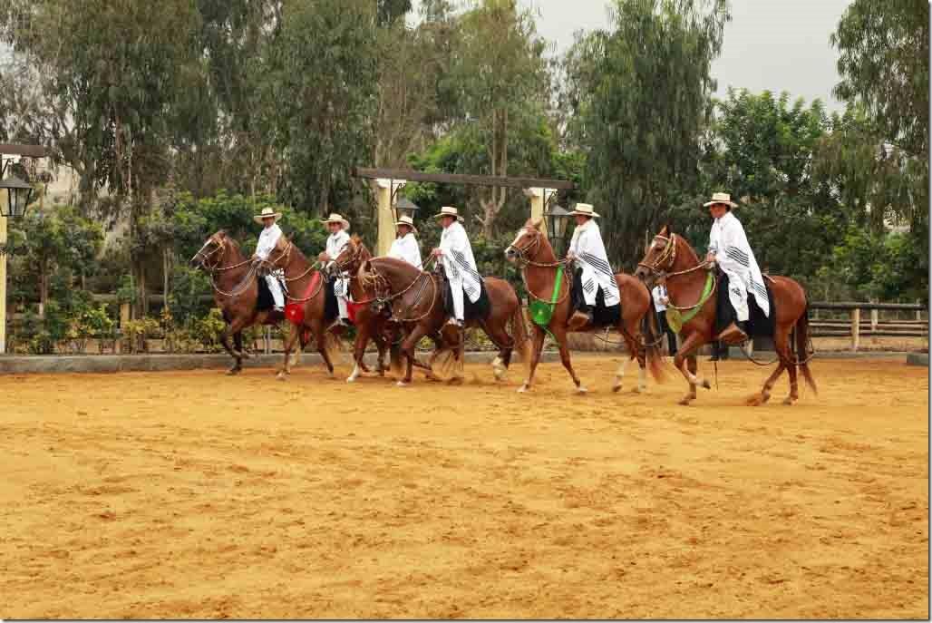 Hacienda Mamacona all horses walking in a single row
