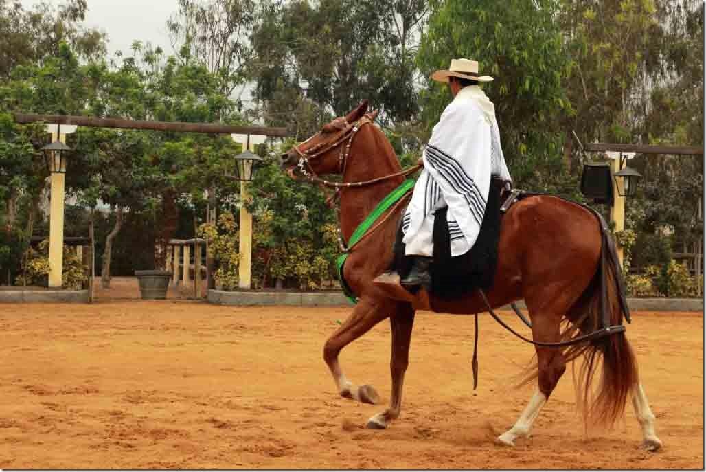 Hacienda Mamacona horse trotting across the ring