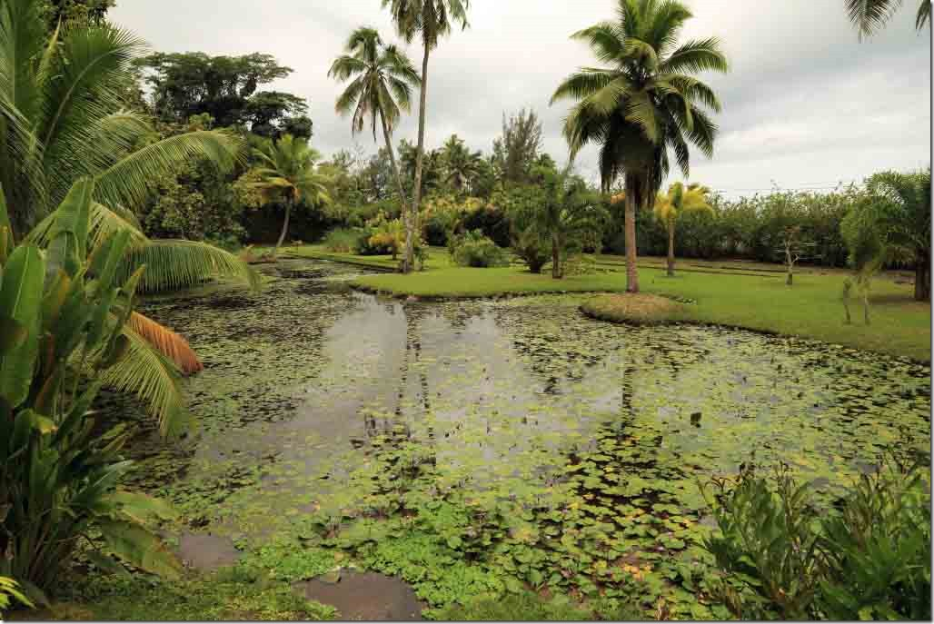 Vaipahi gardens pond with water lilies and surrounded by palm trees