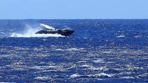 Whale breech landing