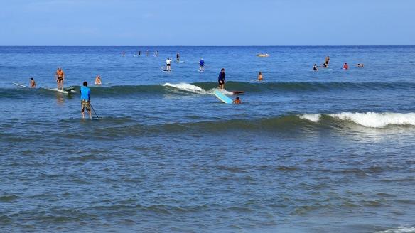 Cove Park surfers