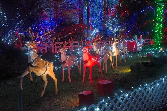 bright-nights-santas-sleigh-reindeer