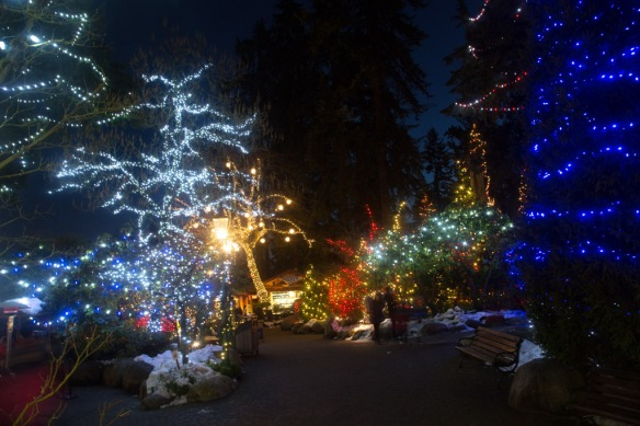 capilano-tree-lights-in-front-of-giftshop