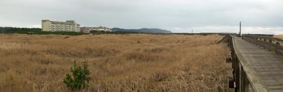 long-beach-wa-dunes-panorama