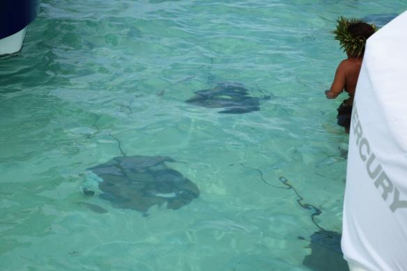 17 Stingrays under water