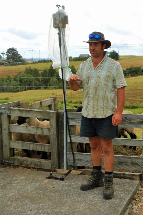 Haumoana ranch hand that sheers sheep
