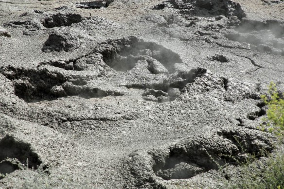 Te Puia bubbling mud pit close-up