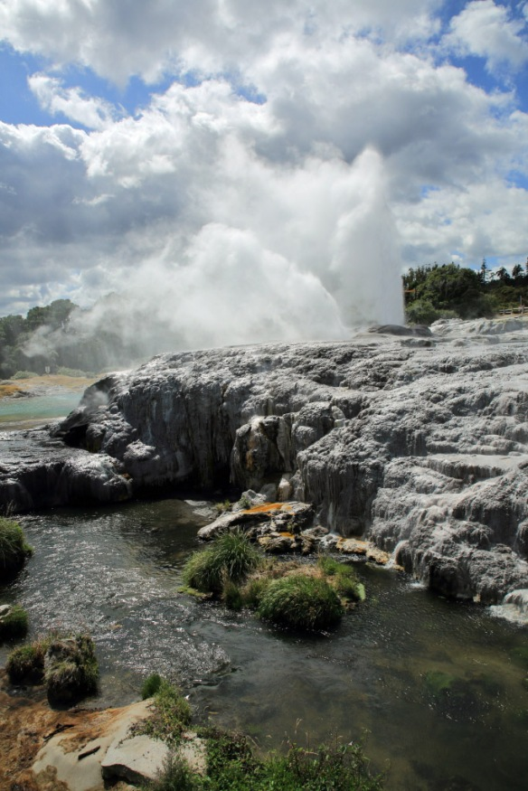 Te Puia Pohutu Geyser and river