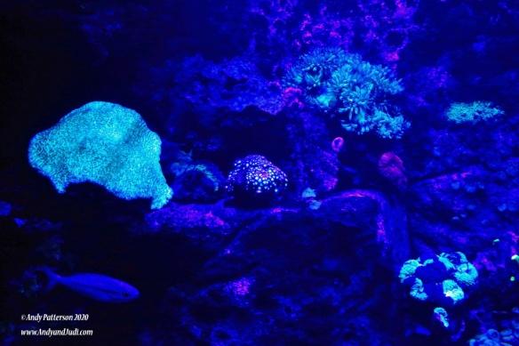 Aquarium 13