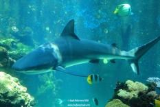 Aquarium 23