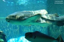 Aquarium 27