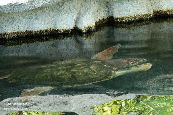 Aquarium turtle 2