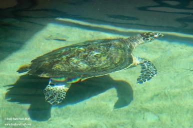 Aquarium turtle 5