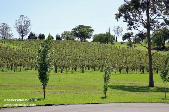 Ben Ean Winery vines