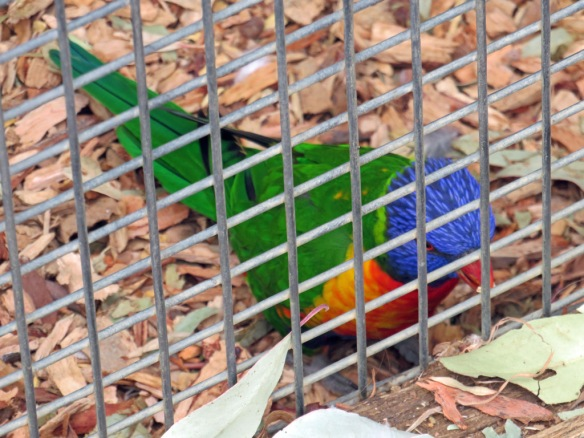 Bird in cage 3