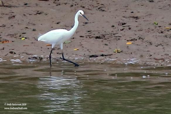 Bird wading along river bank 3