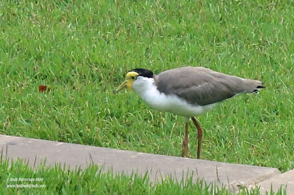 Bird wading in the grass
