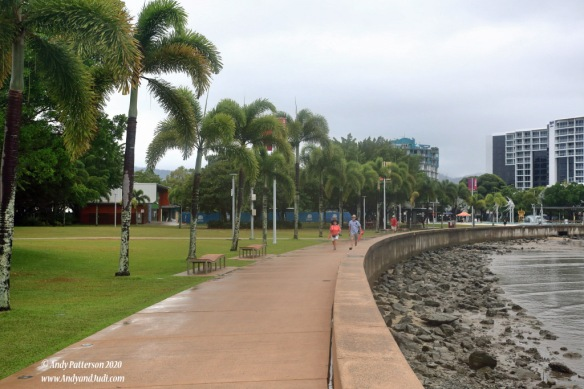 Esplanade tree palm tree lines promenade